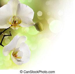 umrandungen, orchideen