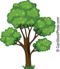 un, alto, árbol