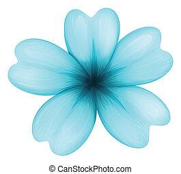 un, azul, five-petal, flor