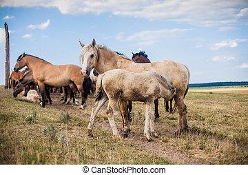 un, caballo, es, alimentación, un, potro, con