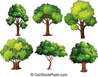 un, conjunto, de, árbol