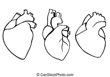 Conjunto órganos Humano Ilustración