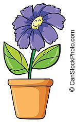 un, flor azul, y, olla