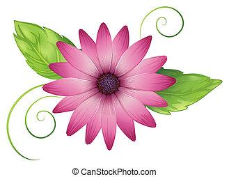 un, flor rosa, con, hojas