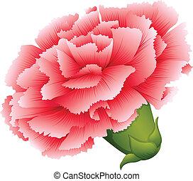un, fresco, clavel, flor rosa