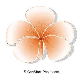 un, fresco, five-petal, flor