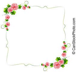 un, frontera, con, clavel, rosa florece