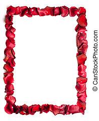 un, frontera, de, rosa roja, pétalos