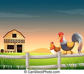 un, gallo, y, un, pollo, cerca, el, barnhouse