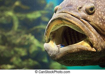 un, grande, pez