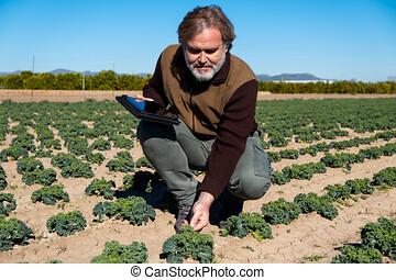 un, granjero, con, un, tableta, supervisa, el suyo,...