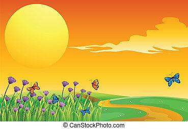un, grupo, de, mariposas, en, el, colinas
