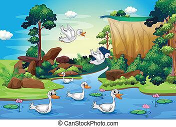 un, grupo, de, patos, en, el, río, en, el, bosque