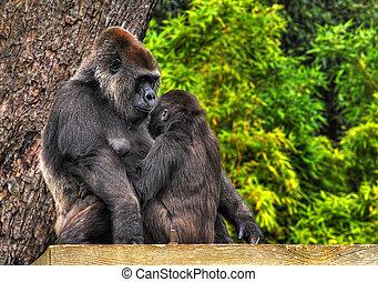 un, hdr, imagen, de, un, madre y bebé, gorila, mirar, tiernamente, en, eack, otros, ojos