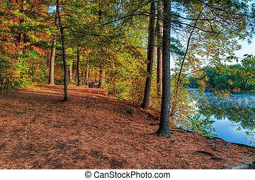 un, hdr, paesaggio, di, uno, foresta, e, pond.