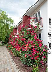 un, hermoso, jardín, de, rosas, en la ventana