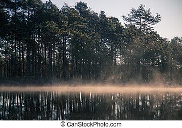 un, hermoso, pantano, charca, con, un, levantar, niebla, durante, el, sunrise., cenagal, en, un, frowen, pantanos, en, autumn., luz brillante, con, sol, flares.
