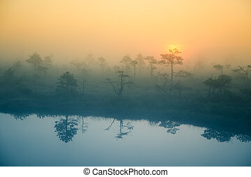 un, hermoso, soñador, mañana, paisaje, de, sol, levantamiento, en, un, brumoso, swamp.