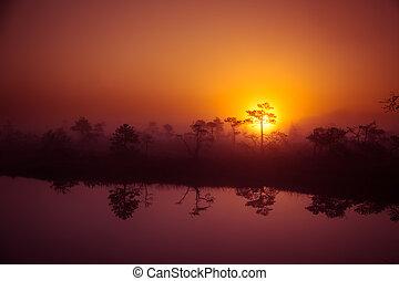 un, hermoso, soñador, mañana, paisaje, de, sol, levantamiento, sobre, un, brumoso, marsh., colorido, artístico, look.