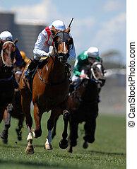 un, jinete, en acción, durante, en, un, caballo, durante, un, race.