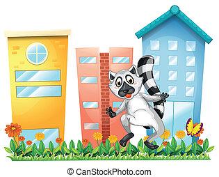 un, lémur, en, el, jardín, cerca, el, alto, edificios