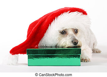 un, perro, navidad