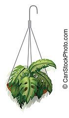 un, planta colgante