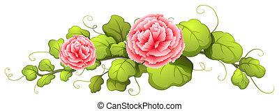 un, planta, con, clavel, rosa florece