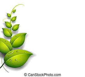un, planta verde, con, gotas del agua