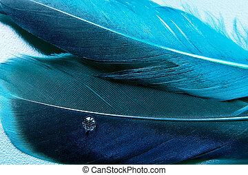 un, poco, más, azul, pluma