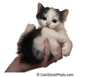 un, poco, velloso, gatito, se sienta, con, un, triste, clase