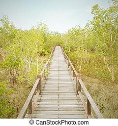 un, puente de madera, en, mangle, bosque