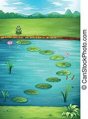 un, rana, y, un, lago