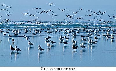 un, variedad, de, seabirds, en, el, costa