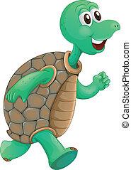 un, vecchio, tartaruga, correndo