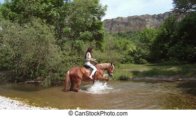 Unamenable horse