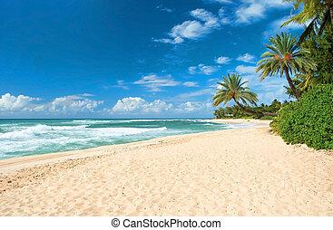 unberührt, sandiger strand, mit, handflächen, bäume, und,...