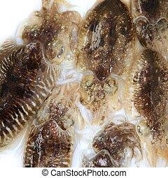 uncooked, squid, middellandse zee, inktvis