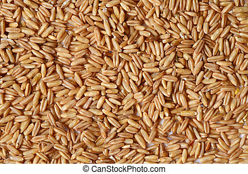 Uncooked whole oat seeds close up shot