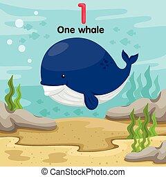 und, baleine, illustrateur, premier