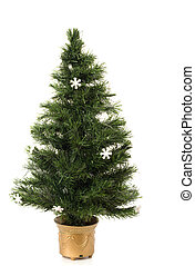 Undecorated Christmas tree on a white background
