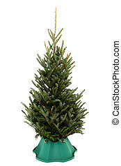 undecorated, kerstboom, in, boompje, stander, op, witte