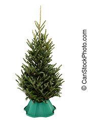 undecorated, kerstboom, in, boompje, stander, op, witte