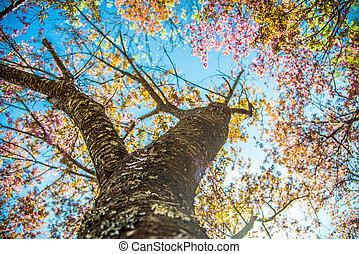 Under branch of pink cherry tree1