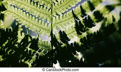 Under green fern leaves a sunny day.