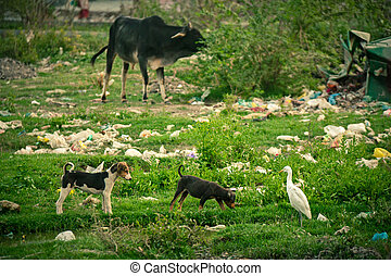 under, plastisk, djuren, pollution