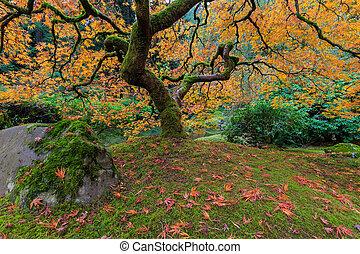 Under the Japanese Mape Tree in Fall Season