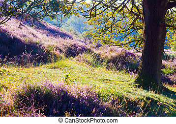 Under the Oak Tree - The Posbank is a particularly heathland...