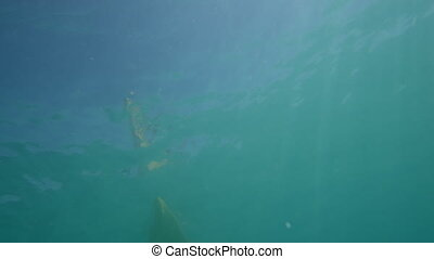 Under the sea crossing the sun with a kayak - A wide slow...