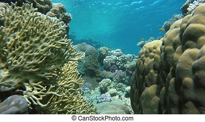 Coral reef. Exotic fishes. The beauty of the underwater world. Life in the ocean. Diving on a tropical reef. Submarine life. Fish of the coral reef.